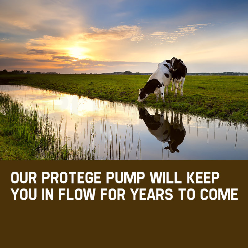 Protege 1.5HP Submersible Bore Water Pump Deep Well Irrigation Stainless Steel by Protege